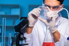 Lekarka bada nowego wirusa w lab przy nocą Fotografia Stock