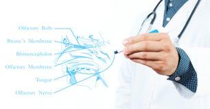 lekarka pojęcie kłama medycyny pieniądze ustalonego stetoskop Powonieniowy system Zdjęcie Stock