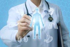 Lekarka pokazuje hologram i wewnętrznych organy Zdjęcie Stock