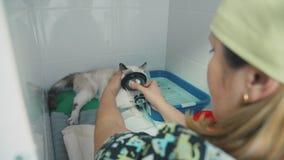 Lekarka stawia weterynarza kota twarzy maskę dla traktowania astma zbiory