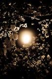 lekcy drzewa Zdjęcie Royalty Free