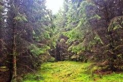 Lekcy lat drzewa Lasowi obrazy royalty free