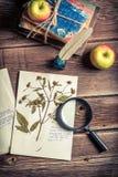 Lekcyjna biologia fotosynteza Obrazy Royalty Free