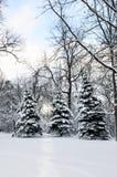 lekka krajobrazowa zimy. Zdjęcia Stock