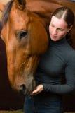 Lekkernij aan paard Stock Foto