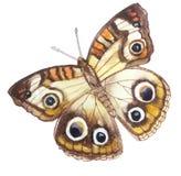 Lekki beżowy motyl z 6 eleganckimi oczami royalty ilustracja