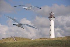 Lekki dom z seagulls Fotografia Stock