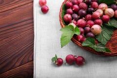 Lekki drewniany koszykowy pełny smakowici barwiący agresty z zielonymi liśćmi Jaskrawi surowi czerwoni agresty w nowej skrzynce Zdjęcia Royalty Free
