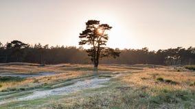 lekki drzewo Zdjęcie Royalty Free