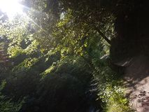 Lekki drzewo obraz stock