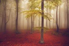 Lekki drzewo w mgle las Obrazy Stock