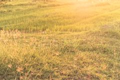 Lekki promień wschód słońca na obszarze trawiastym Zdjęcie Stock