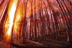 lekki słońce Obraz Stock