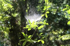 Lekki spiderweb na małej gałązce obrazy royalty free