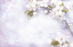 Lekki tło z kwitnąć drzewnego śniadanio-lunch Fotografia Stock