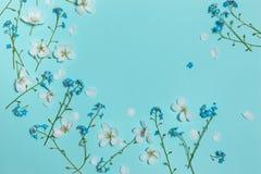 Lekki turkusowy płaski tło z wiosna kwiatami zdjęcie royalty free