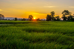 lekki wschód słońca Fotografia Stock