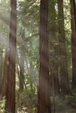 lekkie drzewa Obraz Royalty Free