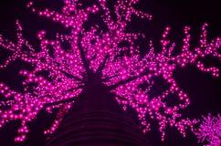 lekkie drzewa Zdjęcia Royalty Free