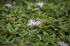 - lekkie fioletowe kwiaty Fotografia Royalty Free
