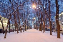 Lekkie iluminacje na drzewach fotografia royalty free