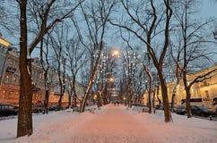 Lekkie iluminacje na drzewach obrazy stock