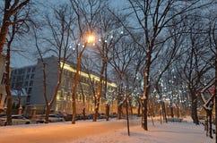 Lekkie iluminacje na drzewach zdjęcia stock