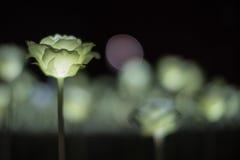 Lekkie róże Zdjęcia Stock