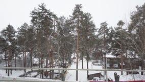 Lekkiego śniegu spadać zbiory wideo