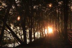 lekkiego światła słonecznego lasowy ciemny zmierzch Obraz Stock
