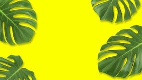 Lekmanna- grönt tropiskt blad för minsta sammansättningslägenhet Idérik ram för orienteringsvändkretssidor med kopieringsutrymme  royaltyfri illustrationer