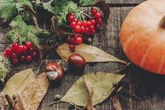 lekmanna- lägenhet för kort för tacksägelse- eller halloween begreppshälsning Beauti Royaltyfri Fotografi