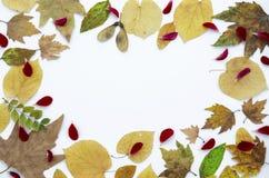 Lekmanna- sammansättning för Colorfull höstlägenhet Torra färgrika sidor för Horisontal ram som isoleras på vit bakgrund, kopieri royaltyfri foto