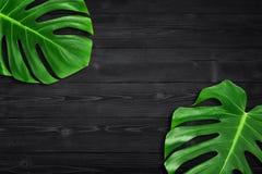 Lekmanna- sammansättning för idérik för orienteringssommar tropisk lägenhet för blad Grön vändkretssidaram med kopieringsutrymme  royaltyfri foto