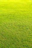 lekplats grön gräsmattamodell, naturlig bakgrund för grönt gräs arkivbilder