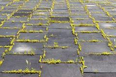 Lekplats med rubber mats (paneler) för säkerhet Långt-abandone Arkivfoto