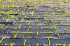 Lekplats med rubber mats (paneler) för säkerhet Långt-abandone Royaltyfri Fotografi