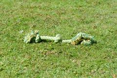 Leksak för hundrepbogserbåt på gräs arkivfoto