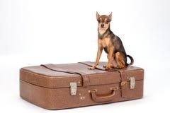 Leksak-Terrier på den stora bruna resväskan Arkivfoton