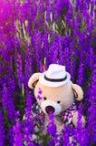 Leksakbjörn i trädgården Arkivfoton