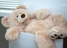 Leksakbjörn som för är stor för leksakslåda royaltyfria bilder