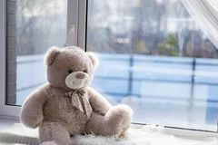 Leksakbjörnen sitter på ett fönster royaltyfri fotografi