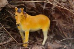 Leksakhäst som fotograferas utanför i verkligt torrt gräs royaltyfri foto