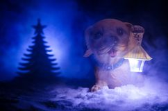 Leksakhund - ett symbol av det nya året under snön mot bakgrunden av gran förgrena sig Leksaks hund som ett symbol av 2018 nya år Arkivfoton