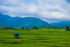 Lekuk 50 Tumbi en Kerinci, Jambi, Indonesia imagen de archivo libre de regalías
