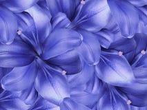 Lelie blauwe bloemen Blauwe gloed bloemencollage De samenstelling van de bloem Close-up Royalty-vrije Stock Afbeeldingen