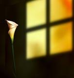 Lelie door het venster Royalty-vrije Stock Afbeelding