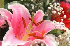 Lelie en gypsophila Royalty-vrije Stock Fotografie