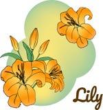 Lelie in heldere kleur Oranje Lelie op abstracte groene achtergrond illustratie, vector Kan als malplaatje van de groetkaart word stock illustratie