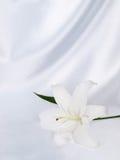 Lelie op een witte zijde Royalty-vrije Stock Afbeeldingen